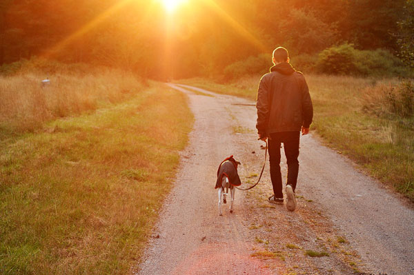 man walking dog– Vets for Dogs and Puppies